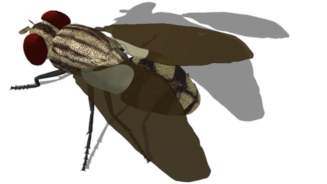 动物-苍蝇SU模型【ID:740053495】