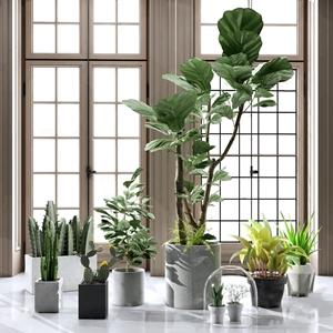 现代植物盆景盆栽组合 现代盆栽盆景 盆景 饰品摆件