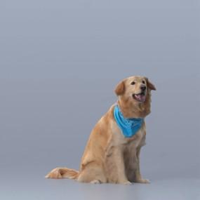 宠物狗3D模型【ID:728107716】