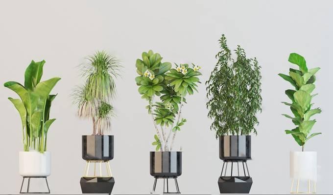 盆栽3D模型【ID:620615181】