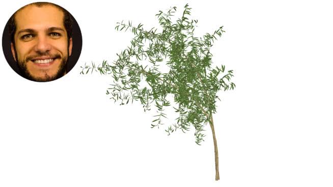 毛竹moss么-失落的經典SU模型【ID:740123901】