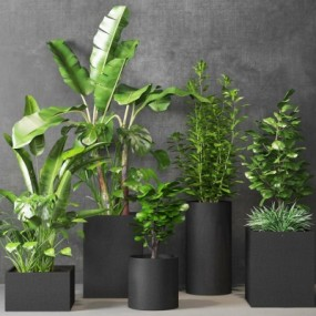 现代植物盆栽组合3D模型【ID:328442801】