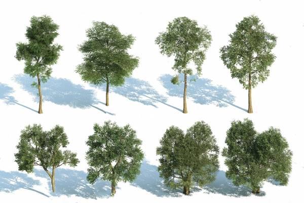 树3D模型【ID:320019609】
