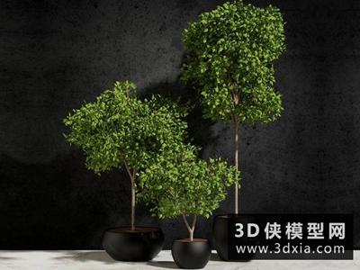 現代植物國外3D模型【ID:229382777】