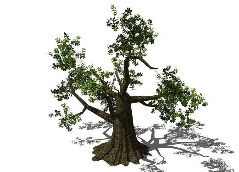 3D植物樹SU模型【ID:136764657】
