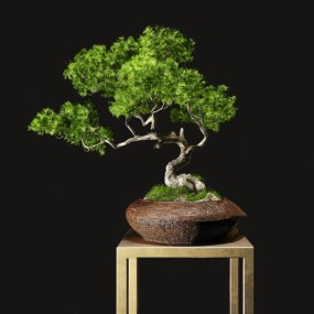 新中式松树盆栽3d模型【ID:247289878】