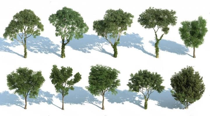 树3D模型【ID:320017662】
