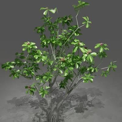 现代树3D模型【ID:320616629】