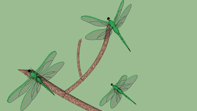 蜻蜓SU模型【ID:740215432】