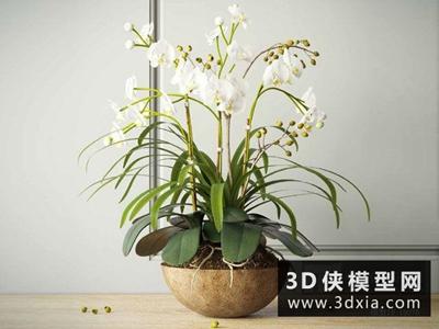 現代裝飾蘭花國外3D模型【ID:229596568】