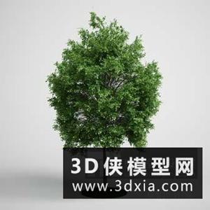 樹國外3D模型【ID:229840672】