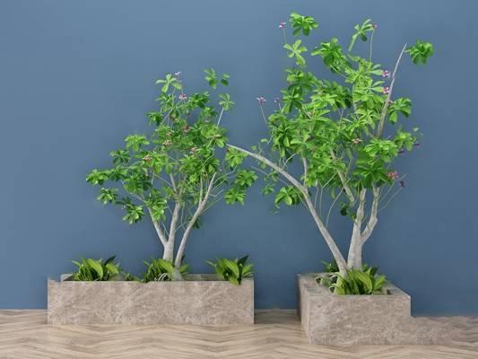 现代盆栽3D模型【ID:120613695】