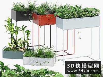 現代植物組合國外3D模型【ID:229354797】