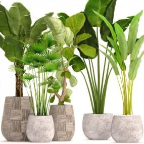 现代绿植盆栽组合3D模型【ID:327789887】