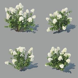 圓錐繡球植物3D模型【ID:334270680】