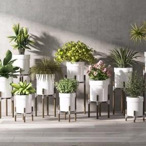 创意植物盆栽3D模型【ID:327930849】