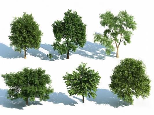 现代杨树3D模型【ID:320602618】