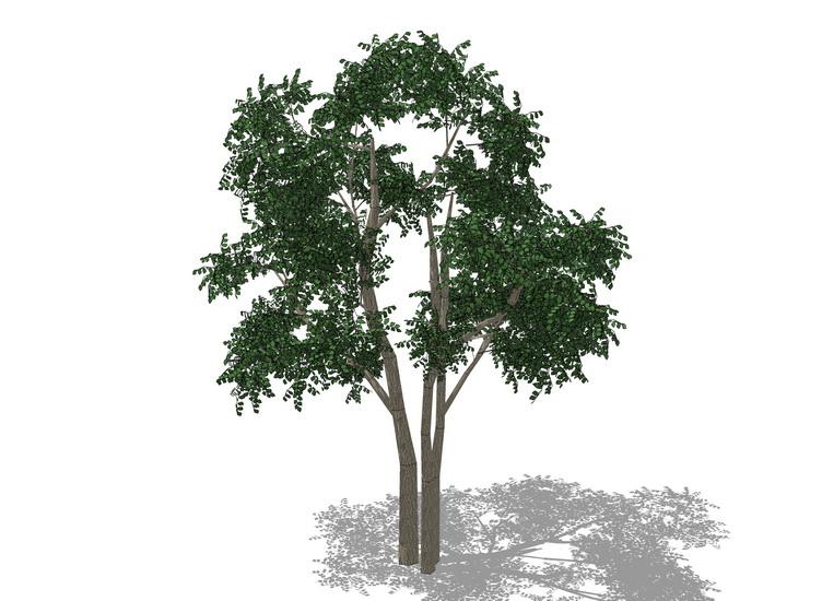 3D植物树SU模型【ID:136905688】