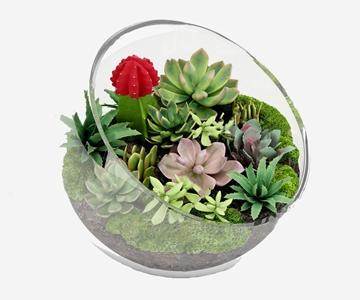 現代多肉植物小盆栽3D模型【ID:241631810】
