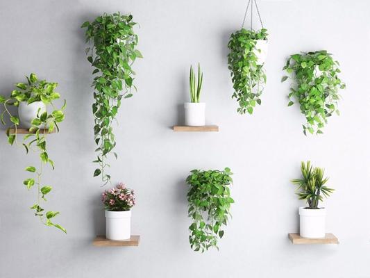植物墻飾3D模型【ID:327927816】