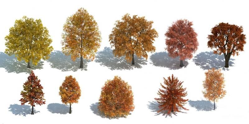 现代树3D模型【ID:320617603】