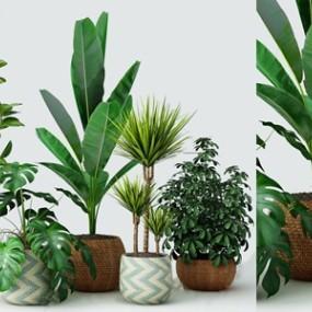 现代盆栽组合3D快三追号倍投计划表【ID:234674814】
