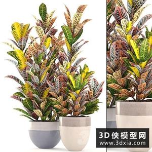 室內盆栽植物國外3D模型【ID:229331741】