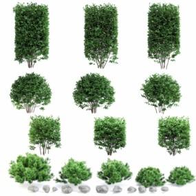 现代灌木绿篱3D模型【ID:528454454】