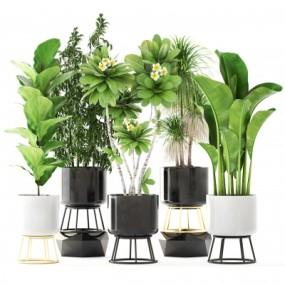 现代植物盆栽组合3D模型【ID:328442838】