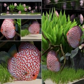 现代鱼缸七彩神仙鱼组合3D模型【ID:628458797】