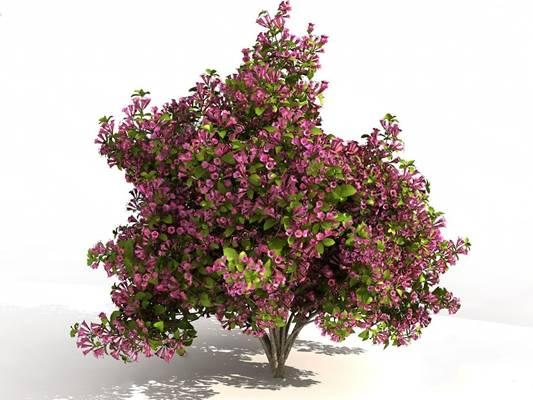 现代灌木3D模型【ID:320613580】
