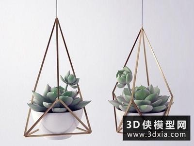 多肉植物國外3D模型【ID:229473568】