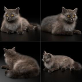 现代猫3D模型【ID:528454373】