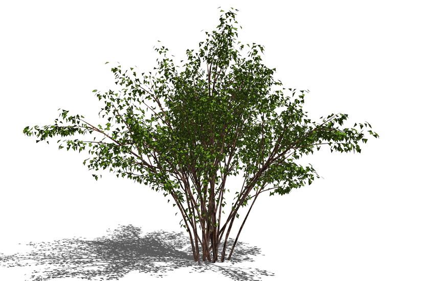 3D植物树SU模型【ID:237046192】