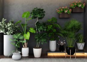 现代盆栽绿植物组合3D模型【ID:327786821】