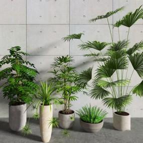 植物3D模型【ID:327930867】