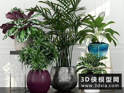 現代植物組合國外3D模型【ID:229405718】