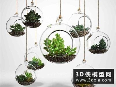 多肉植物國外3D模型【ID:229463717】