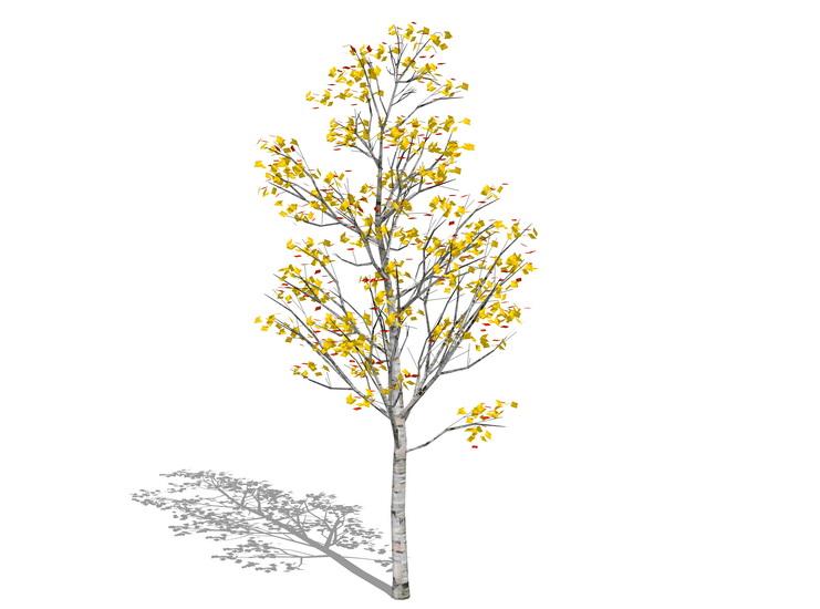 3D植物树SU模型【ID:137107606】