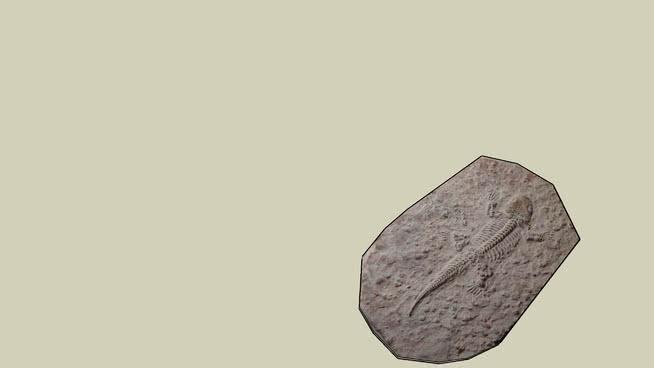 爬行动物化石SU模型【ID:740467500】