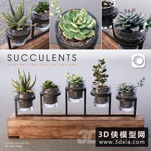 多肉植物组合国外3D模型【ID:929325810】