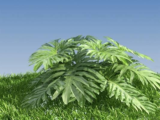现代植物3D模型【ID:620604418】
