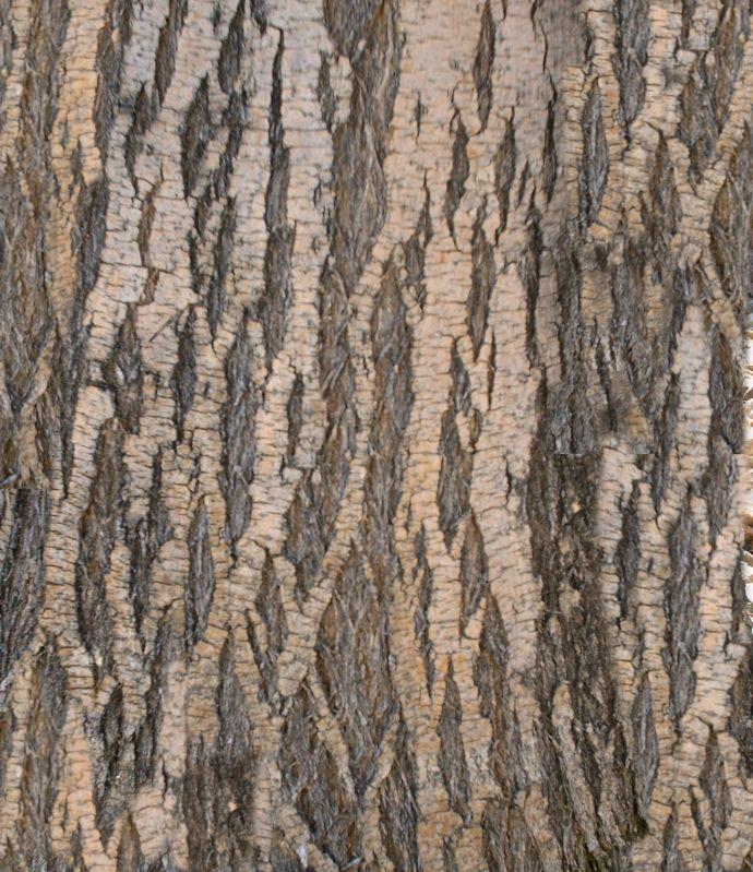 木纹木材-树皮高清贴图【ID:237081361】