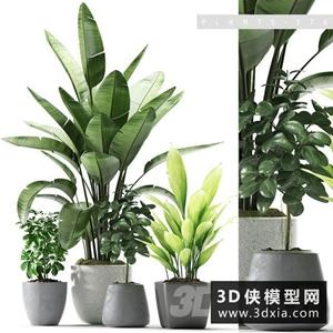 室內植物組合國外3D模型【ID:229445726】