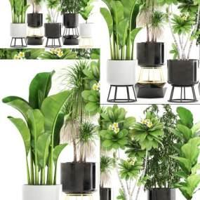 盆栽植物3D模型【ID:243892855】
