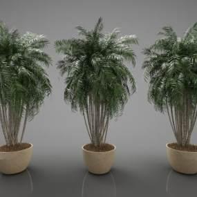 現代風格植物3D模型【ID:247532884】