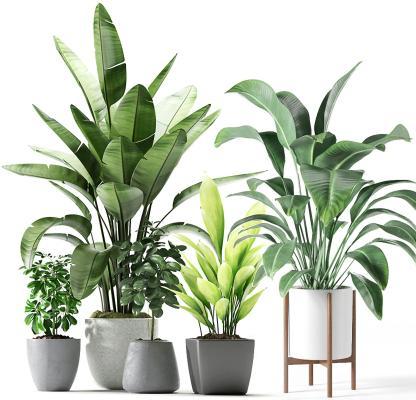 現代綠植盆栽組合3D模型【ID:246342851】