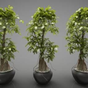 現代風格盆栽3D模型【ID:244143822】