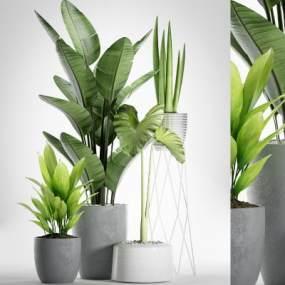 现代盆栽绿植植物组合3D模型【ID:236260871】