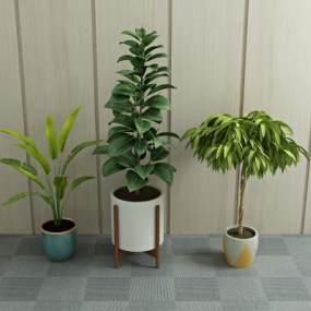 现代绿植盆栽3D模型【ID:231639822】